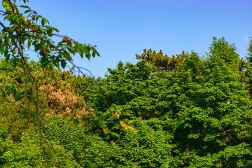 Wald mit Bäumen und blauen Himmel