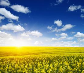 Fototapete - golden field on sky