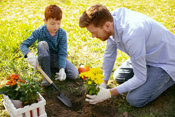 Family cooperation. Nice positive father and son working together while planting flowers in their garden