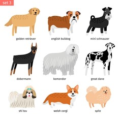 Dog breeds. Vectors dogs breeding collection isolated on white background, great dane and komondor