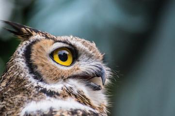 42018 Owl