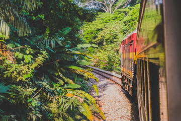 train in jungle landscape