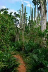 Jungle on Dominican Republic. Forest of the Del Este national park close the capital city Santo Domingo