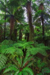 New Zealand rainforest details wide angle landscape