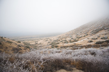 A fog and frost covered New Mexican desert landscape in the winter.