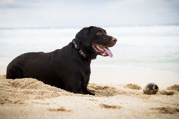 Dog sitting in sand on beach