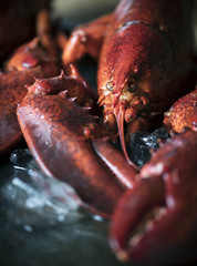 Cooked lobster food photography recipe idea