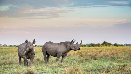 Foto op Aluminium Neushoorn Rhinoceros in the Wild