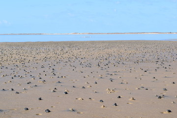 Sand Crab Mounds on Tranquil Beach with Blue Sky and Water