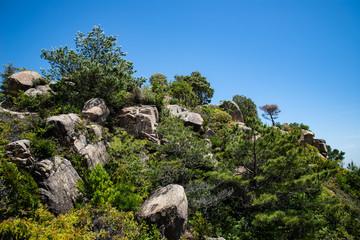 rocks and mediterranean vegetation in Kyushu southern Japan
