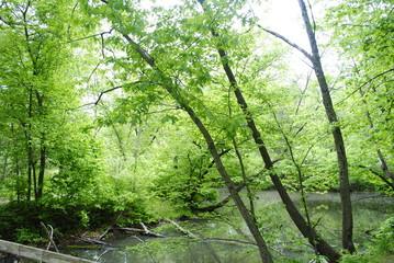 Katina Pond-Ledges State Park