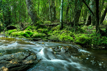 Mountain stream in the forest, the water flows through the stones, calm and serene landscape of rainforest.