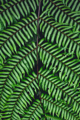 Fern leaves green background in nature