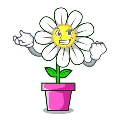 Successful daisy flower character cartoon