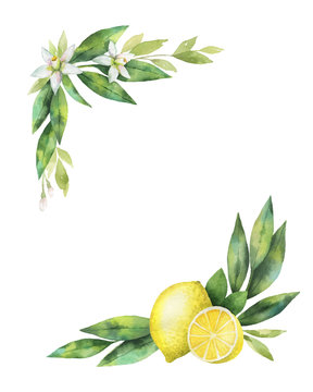 Watercolor vector hand drawn wreath with lemon and leaves.