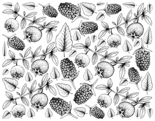 Hand Drawn Background of Chilean Guava and Boysenberries
