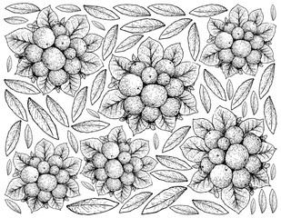 Hand Drawn of Ripe Coralberries on White Background