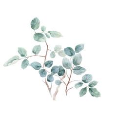 Watercolor leaf illustration
