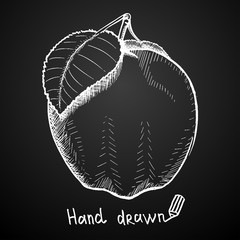 Hand drawn apple on black background. Vector illustration.