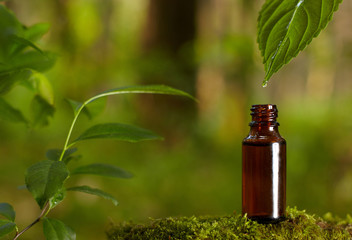 Essential oil falling from green leaf.