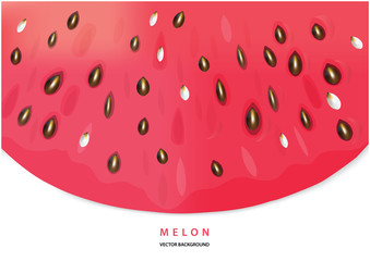 Color vector water melon frame with place fo your text. Fresh sweet watermelon illustration.