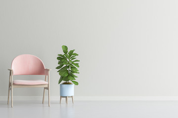 Living room interior wall mock up with velvet armchair and plant, 3d render