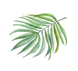 Bright leaf palm, watercolor image for use in thematic products. Good for wedding subjects. You can use in the layout of invitations, postcards an image for the fabric. Palm is a tropical plant.