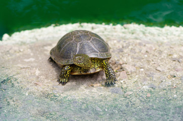 Small turtle in a zoo.