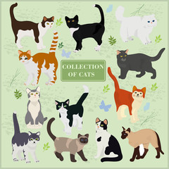 Collection of vector cats on a green background