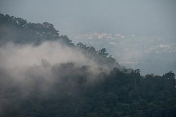 fog above rainforest