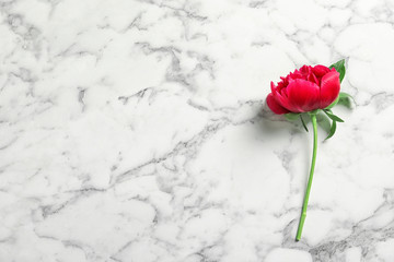 Beautiful blooming peony flower on marble background