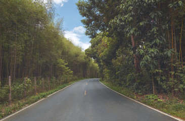 beautiful and romantic view of the road in the middle of the tropical forest