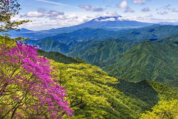 新緑と富士山