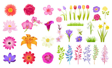Set of Different Flowers Color Vector Illustration Wall mural