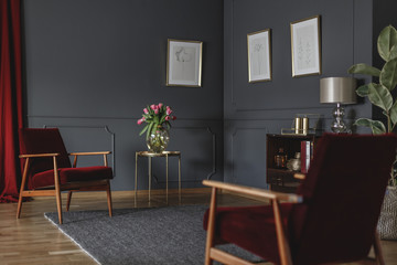 Botanical drawings on a dark gray wall in the corner of a luxurious living room interior with rich, red armchairs and curtain