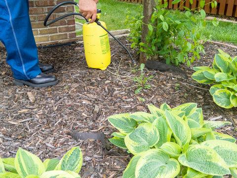Man spraying fresh weeds in a flowerbed