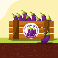 eggplant vegetable always fresh in wood basket vector illustration