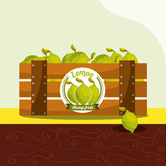 lemon fruit always fresh in wood basket vector illustration