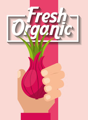 hand holding vegetable fresh organic onion vector illustration