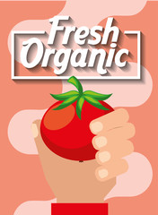 hand holding vegetable fresh organic tomato vector illustration