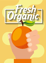 hand holding fresh organic fruit orange vector illustration