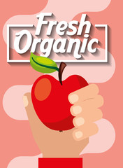 hand holding fresh organic fruit apple vector illustration