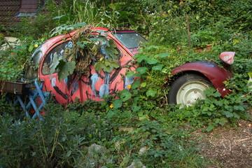 Abandoned car in a garden  Wall mural