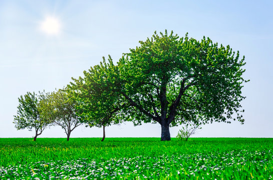 trees in a field. Generation growth legacy family concept