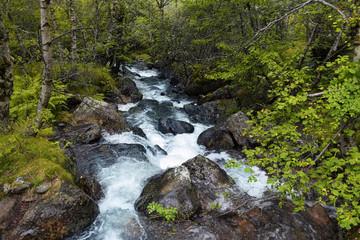 Rio a través de un bosque húmedo