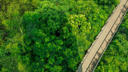 Natural wooden bridge in forest top view
