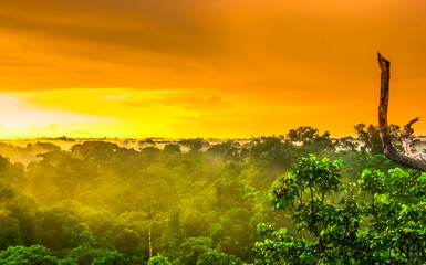 Sunset over the trees of the rain forest in Brazil