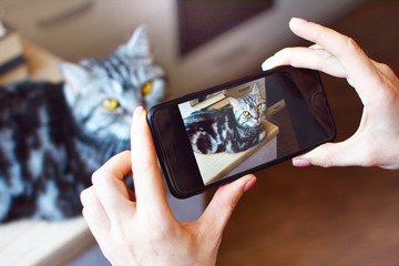 Home photoshoot of a pet. Girl takes picture of her beautiful cat on the smartphone.