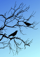 Black vector silhouettes of two birds sitting on a branch on blue background.