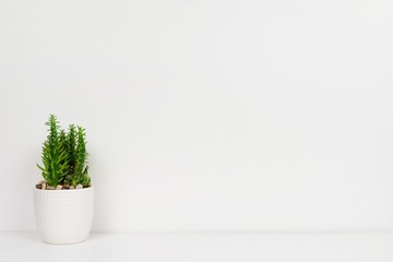 Indoor cactus plant in a white pot. Side view on white shelf against a white wall. Copy space.